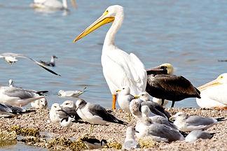 family of seabirds.jpg