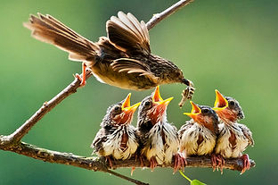 Mama and baby birds.jpg