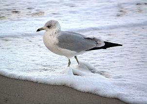bird in surf.jpg
