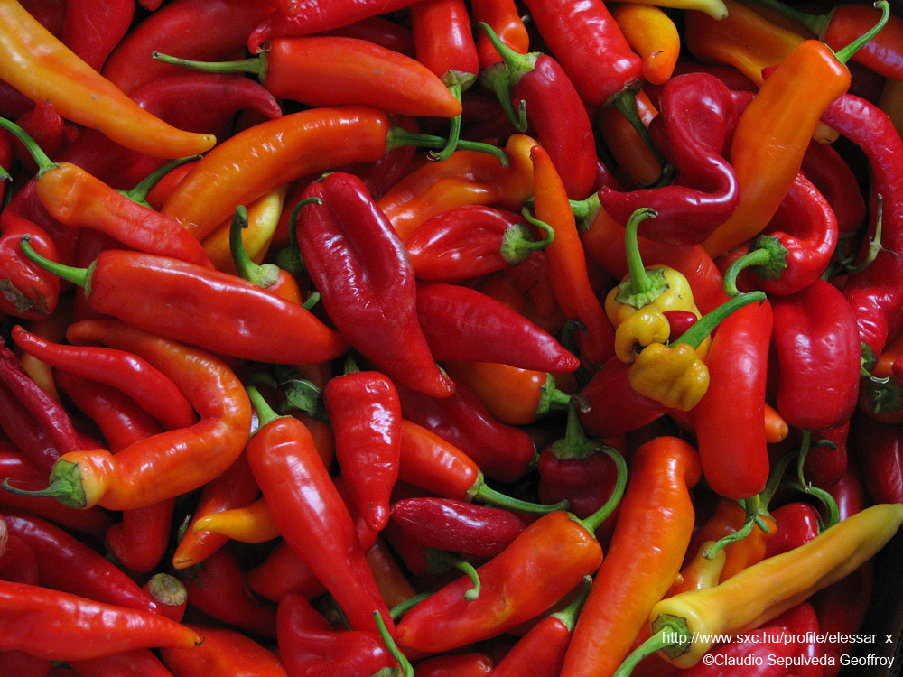 Zoomed-in picture of a lot of red chili peppers