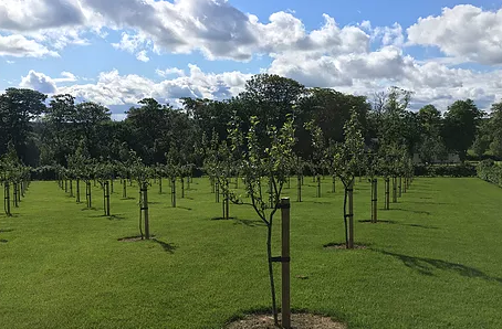 Orchards for farms, smallholders and estates