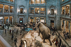 Smithsonian-Tour-History-Natural-Washing