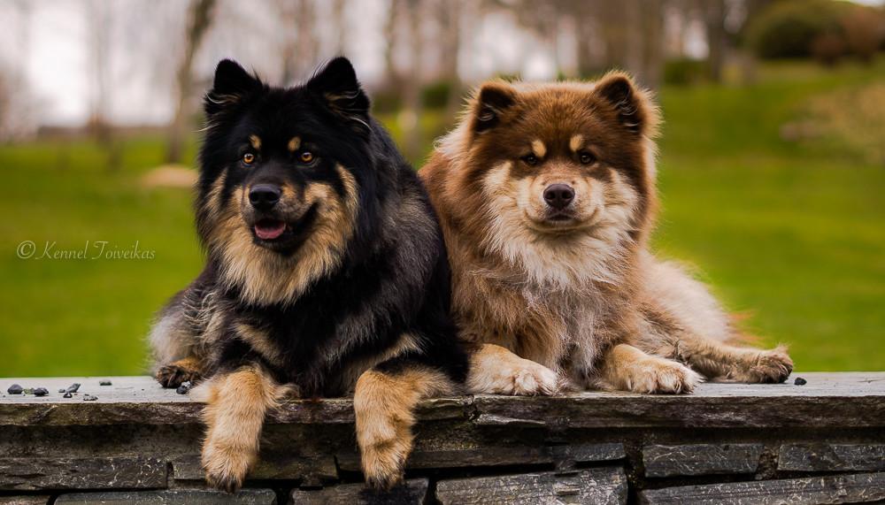 Brüno og Miko