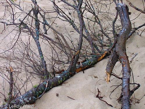 Beach Branches