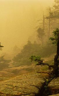 Fog on Otter Cliff