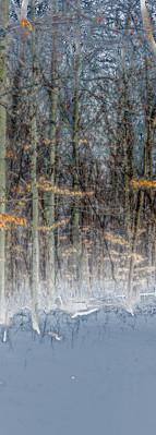 Reverse Trees