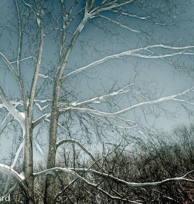 Pale Tree.jpg