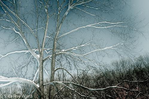 Michigan Winter I