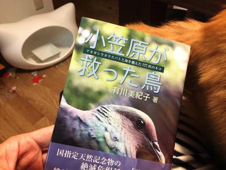小笠原の鳥