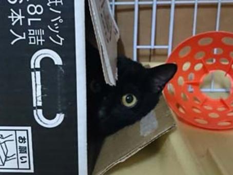 小笠原の猫情報