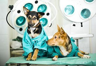 Dog in veterinary clinic.jpg