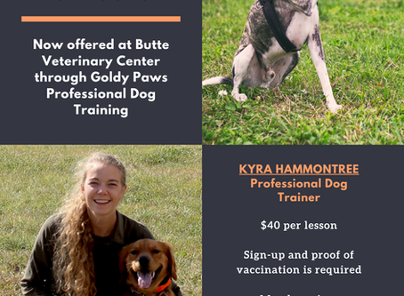 Canine Obedience Classes - Now Offered at BVC!