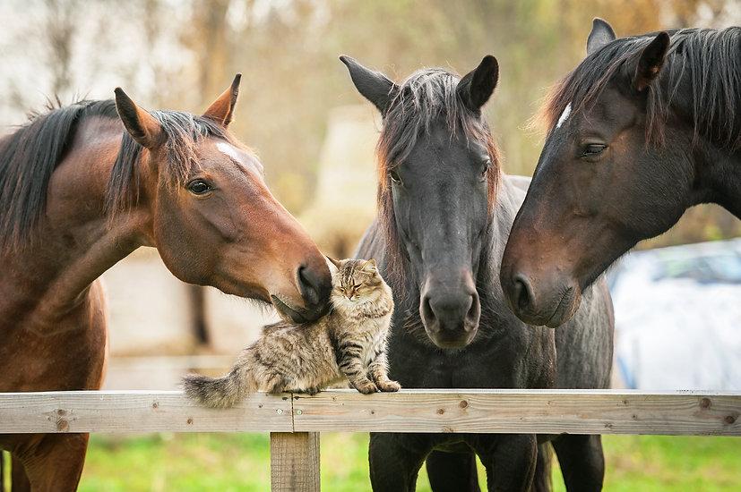 Three horses and cat.jpg
