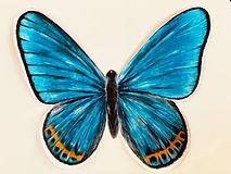 teal-butterfly.jpg