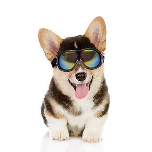 Safety dog.jpg
