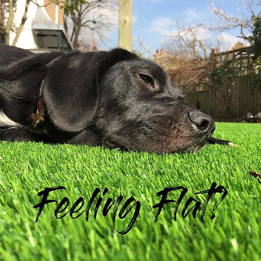 Feeling flat.jpg