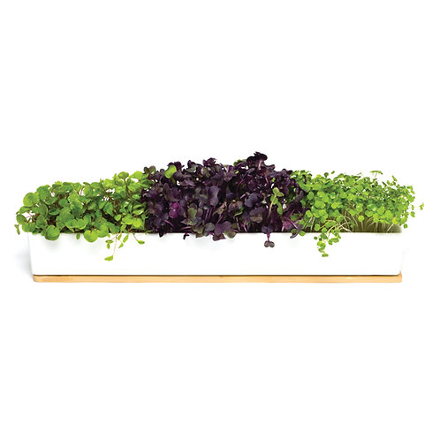 Urban Greens windowsill box with healthy micro greens, porcelain window box and bamboo lid