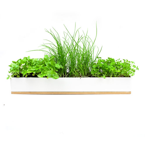 MICRO HERBS WINDOWSILL GROW KIT