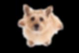 Turfresh artificial grass pet urine odour eliminator dog