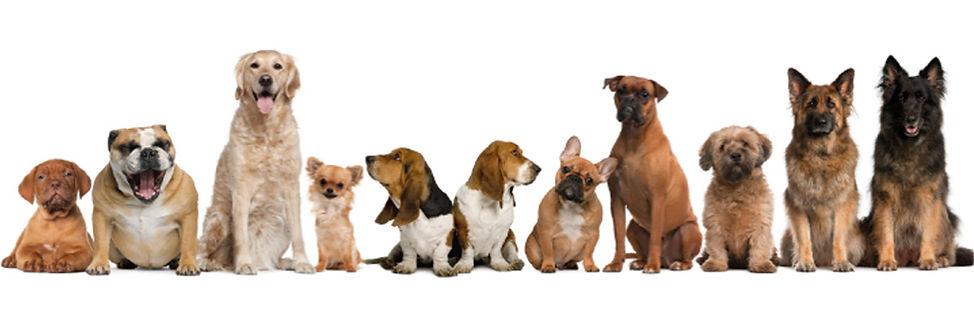 Turfresh artificial grass pet urine odour eliminator dogs