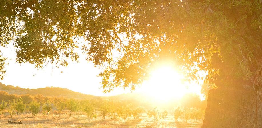 tecate-sunny-scaled.jpg