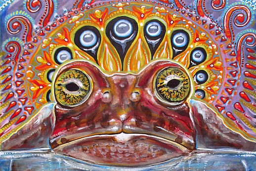 psychedelic-toad.jpg
