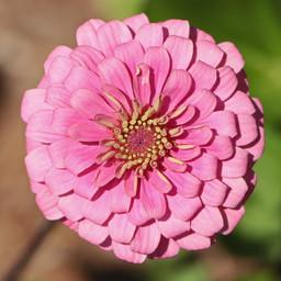 Best Flower Photos (26).jpg