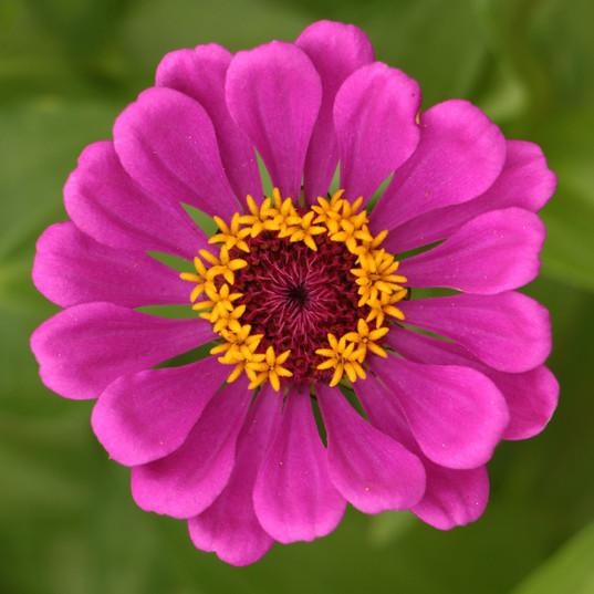 Flowers (10).jpg