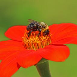 Best Bees (12d) !!.jpg