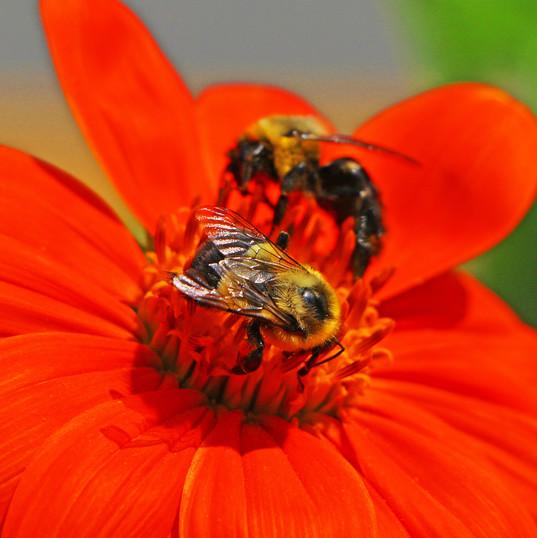 Best Bee Photo (3) !!.jpg