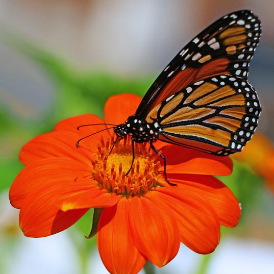 Best Butterfly Photos (6b).jpg