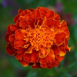 Best Flower Photos (16).jpg