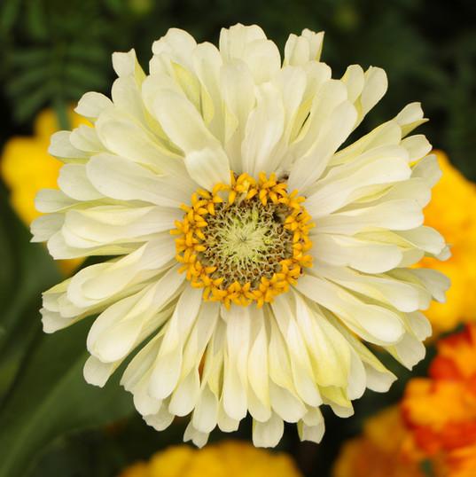 Flowers (14).jpg
