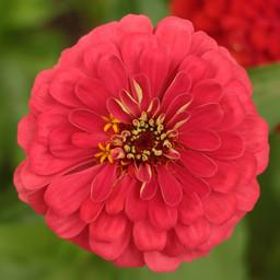 Flowers (12).jpg