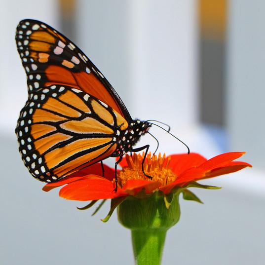 Best Butterfly Photos (3b).jpg