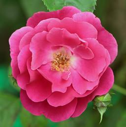 Best Flower Photos (24).jpg