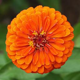 Best Flower Photos (31).jpg