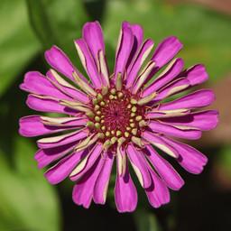 Best Flower Photos (27).jpg