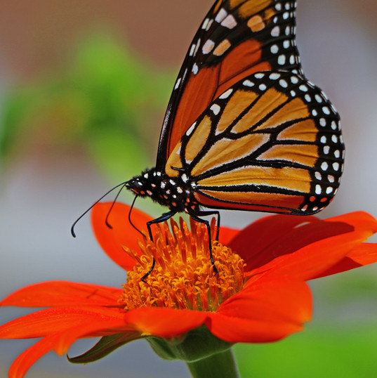Best Butterfly Photos (7b).jpg