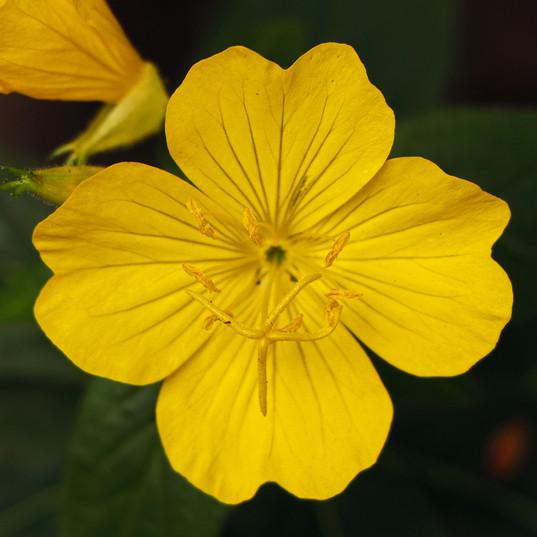 Best Flower Photos (25).jpg