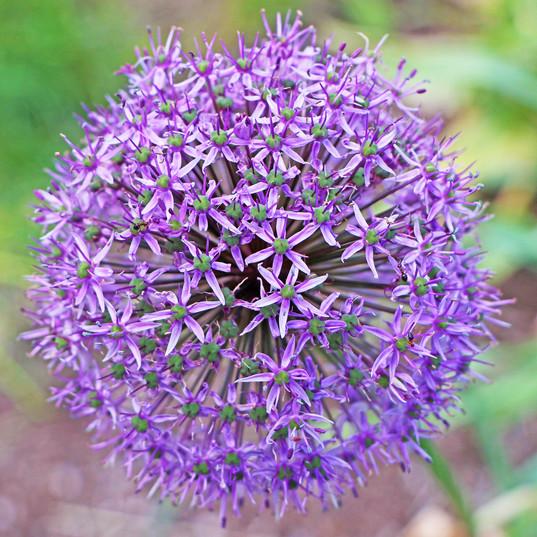 Best Flower Photos (17).jpg