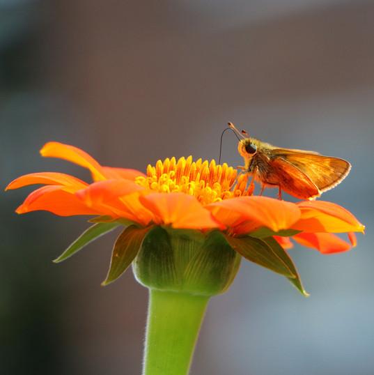 flying bugs (1).jpg