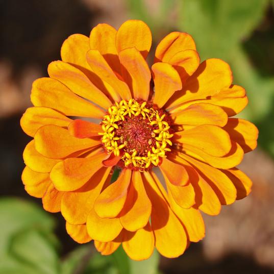 Best Flower Photos (32).jpg