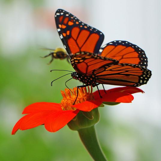 Best Butterfly Photos (1).jpg