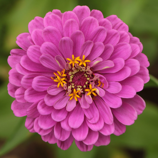Flowers (6).jpg
