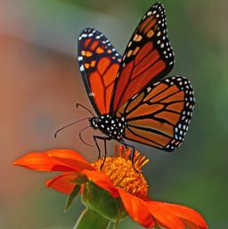 Best Butterfly Photos (2b).jpg