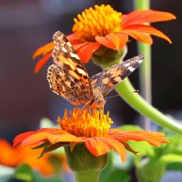 flying bugs (4).jpg