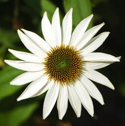 Best Flower Photos (28).jpg