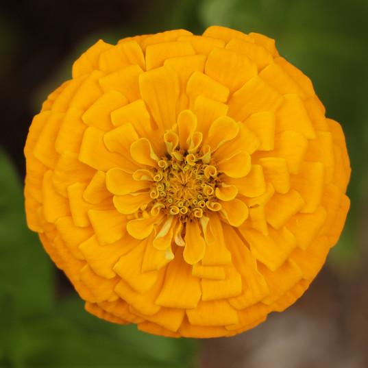 Flowers (13).jpg