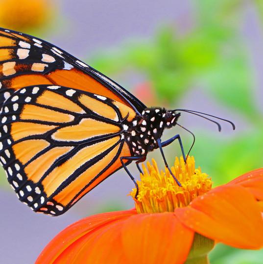 Butterfly (5).jpg
